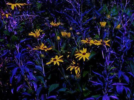 Sunflowers in the Night by Tasha Starr