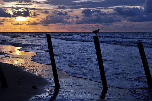Sunrise In Galveston by Timothy Johnson