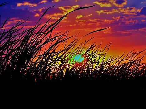 Sunset by Alisha Luby