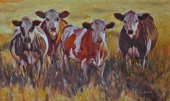 Sunset Cows by Tahirih Goffic
