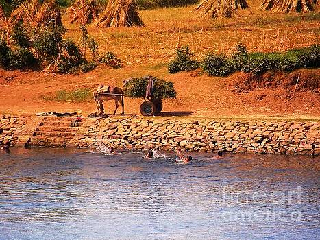 Sunset Nile Swim by Elma Sulek