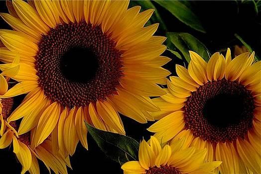 Sunshine by Stephen Chard