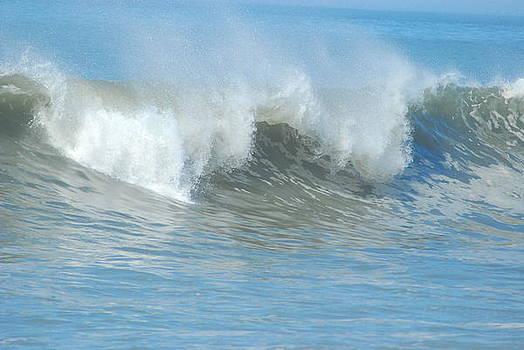 Surfing Waves by Wanda Jesfield
