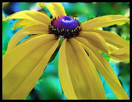 Suzie Sunshine by Pam Utton