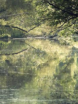 Swamp 2 by Michelle Dennis