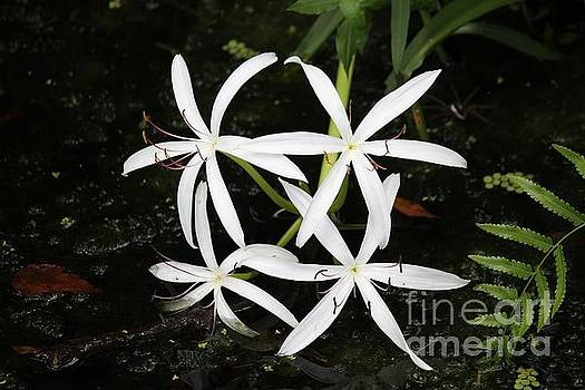 Swamp Lilies by Theresa Willingham