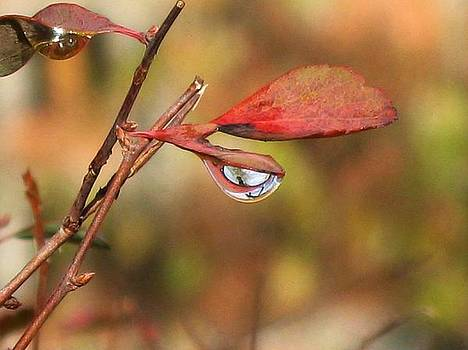 Tears of autumn by Ioana Geacar
