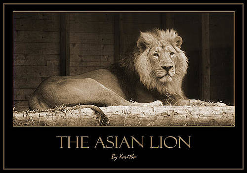 The Asian Lion by Kavitha