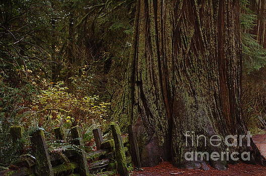 The gateway to Redwoods by Rose Jones