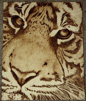 Tiger Stare by Angel Abbs-Portice