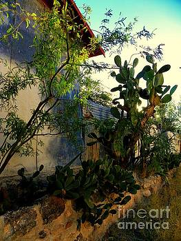 Tin and Cactus by Elma Sulek