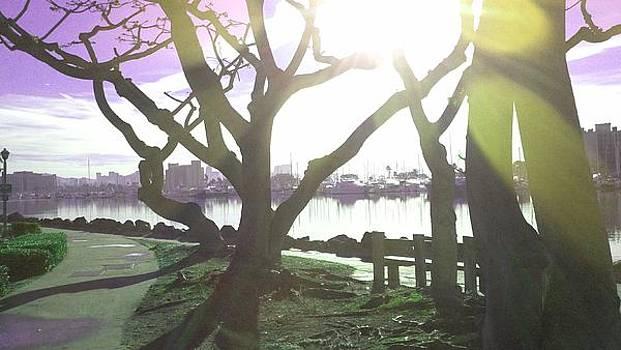 Tree Dance by Catherine Kurchinski