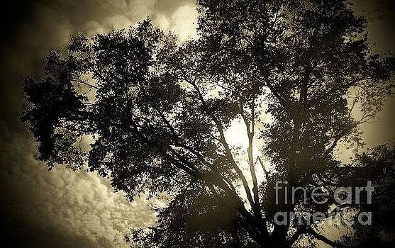 Tree Silhouette by Victor Sexton