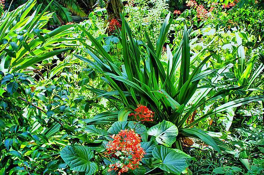 Tropical Garden by Thomas  MacPherson Jr