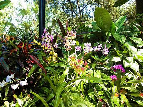 Tropical Plants by Anna Baker