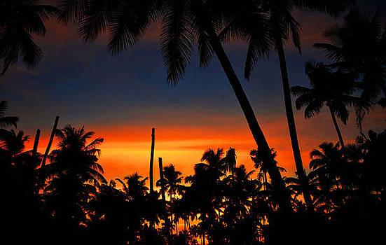 Typically Tropical by Farah Faizal