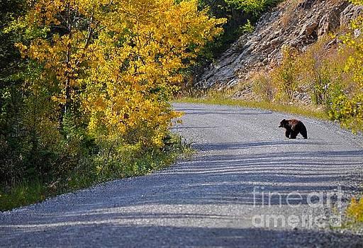 Little Black Bear by D Nigon