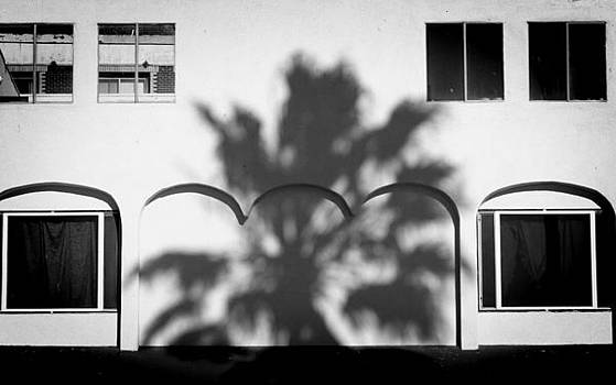 Venice Palm Shadow by Shane Rees