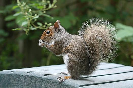 Visiting Squirrel Luncheon by Bonnie Boden
