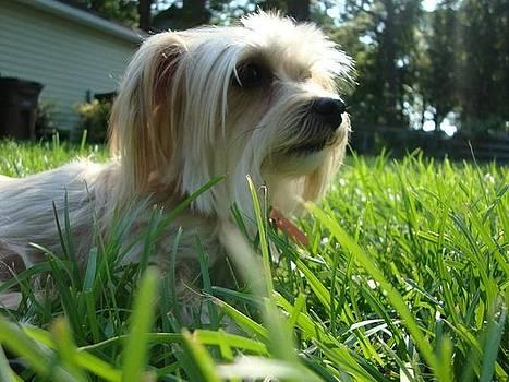 Watch Dog by Bobby Martin