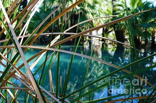 Waterhole by Melisa Fretwell
