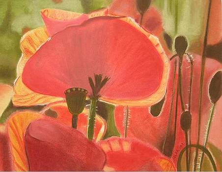 Where poppies grow by Catherine Dewulf