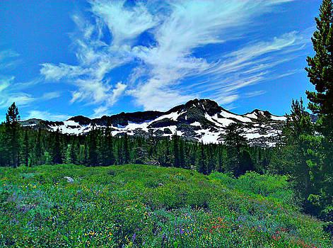 Wild Flower Mountain by Brad Scott