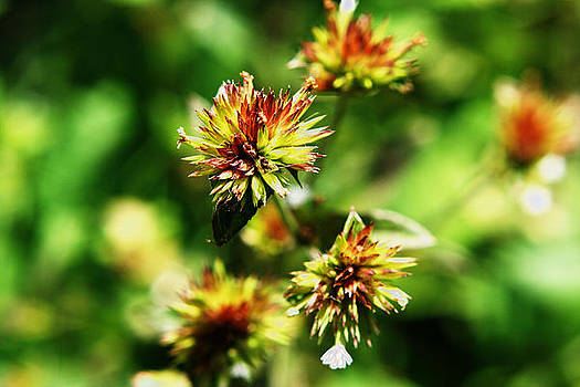 Wildflower 4 by Sonia Rodriguez