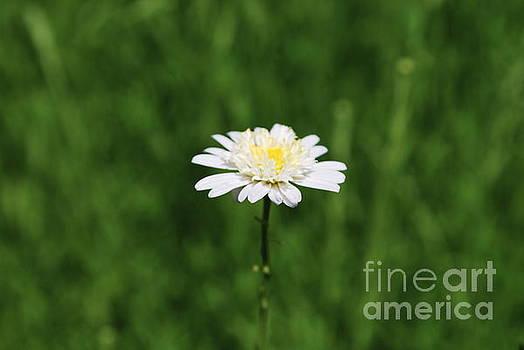 Wildflower by Kathy Bradley