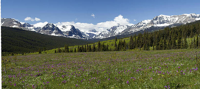 Wildflowers Glacier National Park by Larry Darnell