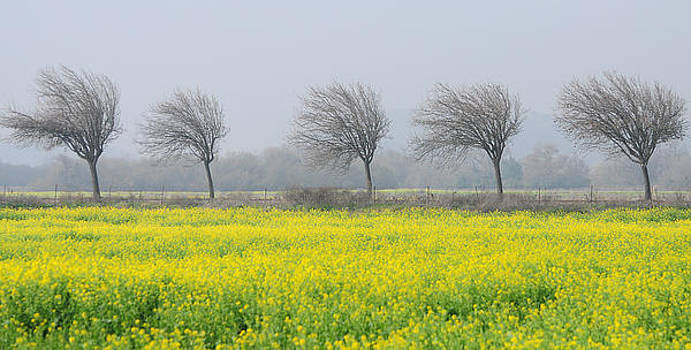 Windswept by Srikanth Srinivasan