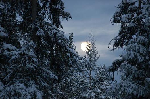 Winter Moon by Edd  Voss