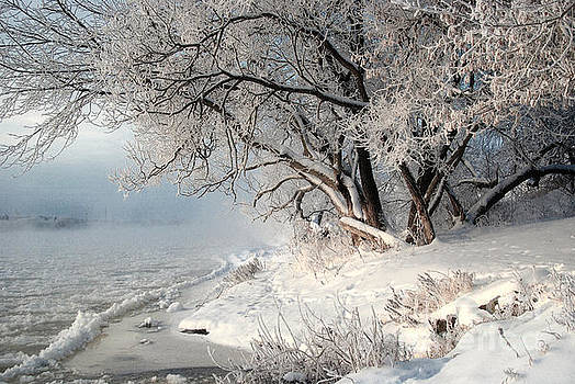 Winter morning by Vladimiras Nikonovas