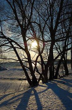 Winter Shadows by Debbie Cook