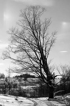 Winter Traila by Debbie Cook
