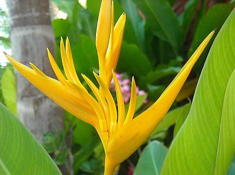 Yellow Bird of Paradise Mexico by Liliana Ducoure