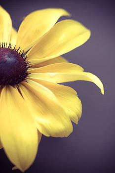 Yellow burst  by Tamara Hamula