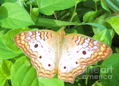 Flower Garden Moth by Trudy Brodkin Storace