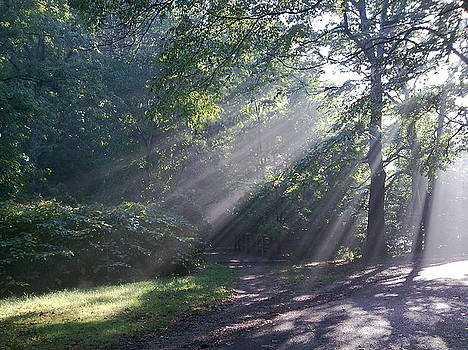Forest Sunrays by Helen Vanterpool