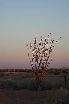 Arizona Sunrise by Hazel Rice