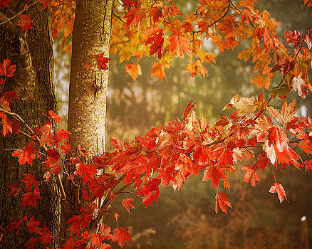 Autumns End by TnBackroadsPhotos