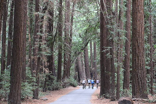 Gary Canant -  Big Sur Redwoods