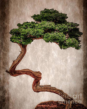 Bonsai by Tom Gari Gallery-Three-Photography