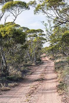 Bush Track, Australia by Vicki Vale