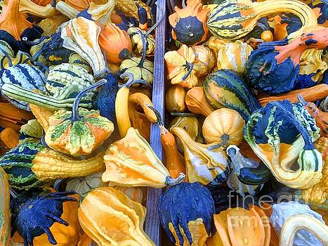 Edward Sobuta -  Fall Colors Pumpkins and Gords 9