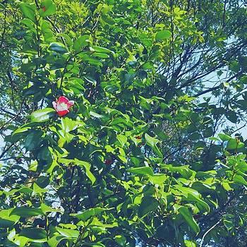 #椿 #flower #新緑 #green #紅色 by Bow Sanpo