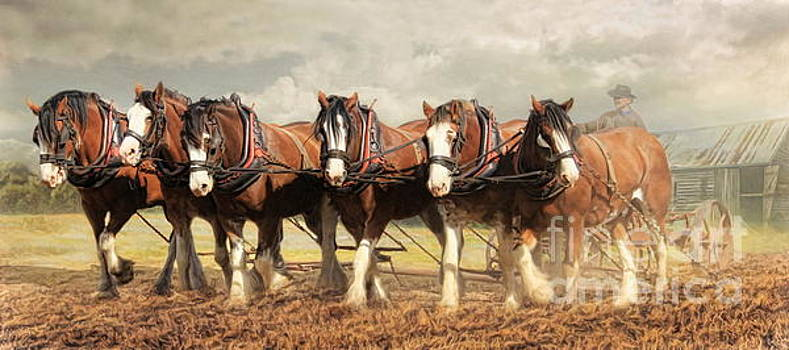 Horse Power by Trudi Simmonds