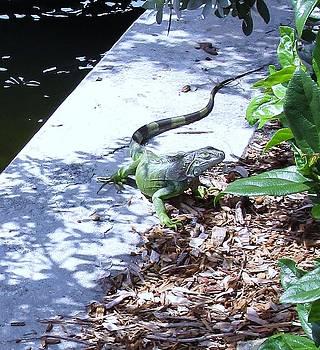 Iguana Strolling Waterway by Trudy Brodkin Storace