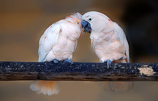 It must have been love... by Nataly Rubeo