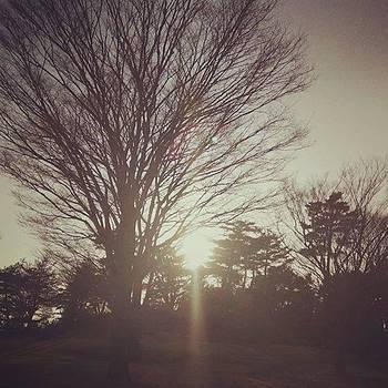 #人生 #life #樹々 #樹 #tree by Bow Sanpo